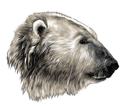 polar bear head in profile, sketch vector graphics color illustration on white background Illustration