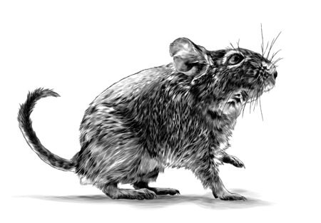 mouse standing sideways full length with raised front paw, sketch vector graphics monochrome illustration on white background