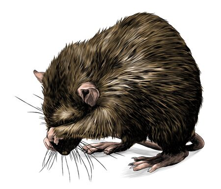 mouse stands tall on its hind legs and shyly covers its muzzle with its paws, sketch vector graphics color illustration on a white background
