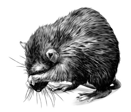 mouse stands tall on its hind legs and shyly covers its muzzle with its paws, sketch vector graphics monochrome illustration on a white background
