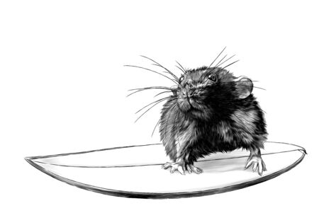 mouse surfing, sketch vector graphics monochrome illustration on white background