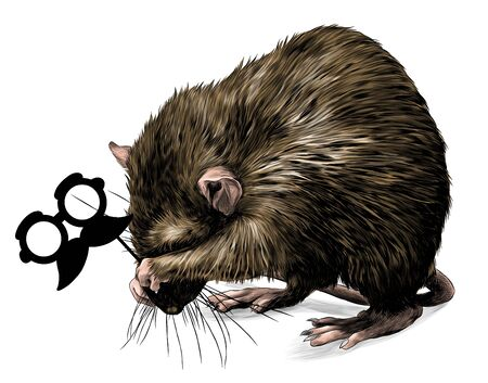 mouse stands on its hind legs shyly covers its muzzle and holds a masquerade mask in its paws, sketch vector graphics color illustration on white background