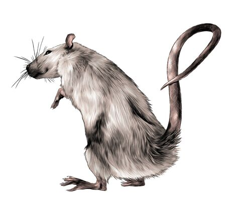 mouse standing on its hind legs full length turned sideways, sketch vector graphics color illustration on white background