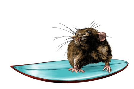 mouse surfing, sketch vector graphics color illustration on white background