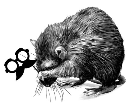 mouse stands on its hind legs shyly covers its muzzle and holds a masquerade mask in its paws, sketch vector graphics monochrome illustration on white background