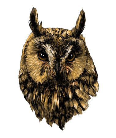 owl head full face sketch vector graphics color illustration on white background