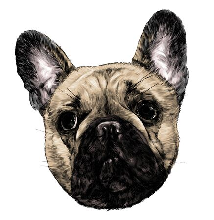 dog head breed pug full face sketch vector graphics color illustration on white background Stock Illustratie
