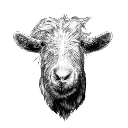Tête de chèvre plein visage, croquis d'illustration monochrome de graphiques vectoriels sur fond blanc