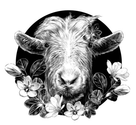 goat head full face on circle background and composition decorated with grass and flowers, sketch vector graphics monochrome illustration on white background