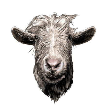 goat head full face, sketch vector graphics color illustration on white background
