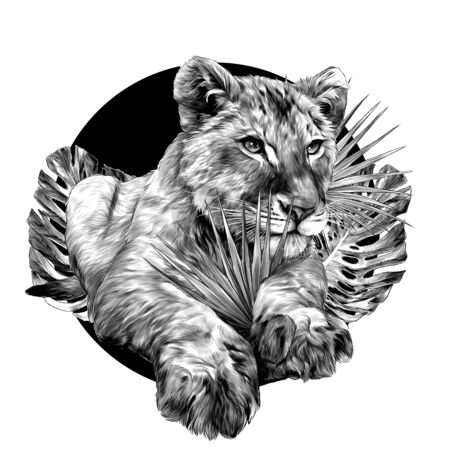 little lion lies full length on the background of a round composition of tropical plants, sketch vector graphics monochrome illustration on a white background Stock Illustratie