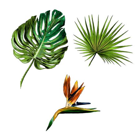 set of tropical leaves and flowers, sketch vector graphics color illustration on white background