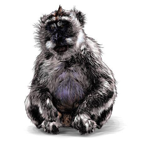Mono sentado a toda altura con las patas dobladas sobre las patas traseras mirando ligeramente hacia los lados con los ojos abatidos, dibujo ilustración vectorial en estilo gráfico sobre un fondo blanco.