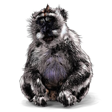 monkey sitting at full height with his paws folded on his hind legs looking slightly sideways downcast eyes, sketch vector illustration in graphic style on a white background