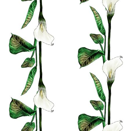 seamless pattern with image of Calla plant stripes with flower buds and leaves, sketch vector graphics color illustration on white background