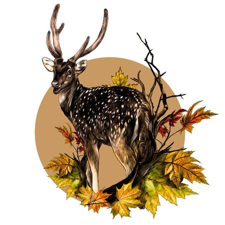 DOE stands at full height with his back turned and looks back round composition with a tree branch and autumn maple leaves, sketch vector graphics color illustration on a white background