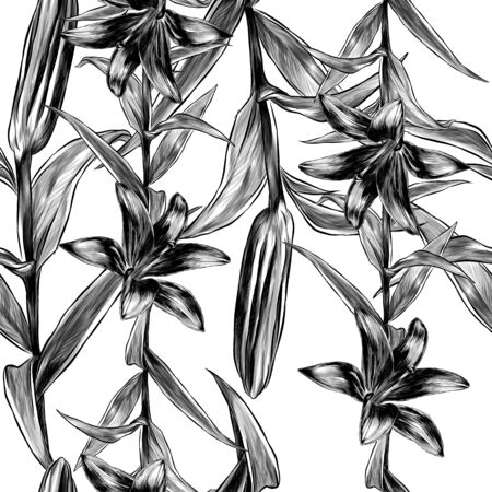 seamless pattern depicting a Lily plant with flower buds and leaves, sketch vector illustration in graphic style on a white background
