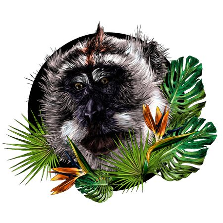 monkey head looks slightly sideways with downcast eyes round composition with tropical plants on the edges, sketch vector illustration in graphic style on a white background