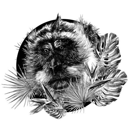 monkey head looks slightly sideways with downcast eyes round composition with tropical plants on the edges, sketch vector illustration in graphic style on a white background 向量圖像