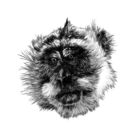 monkey head looks slightly sideways with downcast eyes, sketch vector illustration in graphic style on white background