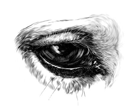 Close-up d'oeil de cheval, croquis d'illustration monochrome de graphiques vectoriels sur fond blanc