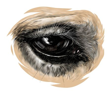 horse eye close-up, sketch vector graphics color illustration on white background