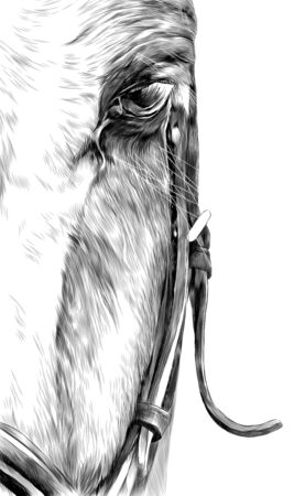 half horse head in full face close-up, sketch vector graphics monochrome illustration on white background