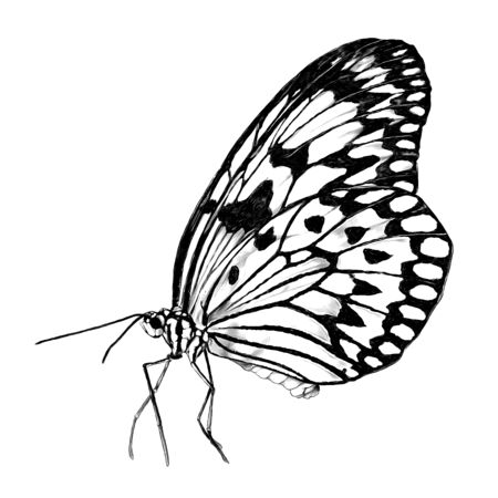 butterfly side view, sketch vector graphics monochrome illustration on white background