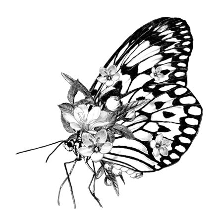 butterfly side view decorated with flowers, sketch vector graphics monochrome illustration on white background Stock fotó - 137970344