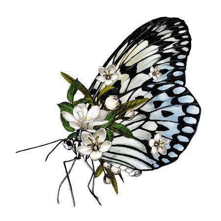 butterfly side view decorated with flowers, sketch vector graphics color illustration on white background