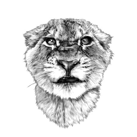 muzzle of a small tiger with a full-face grin, sketch vector graphics monochrome drawing on a white background Vectores