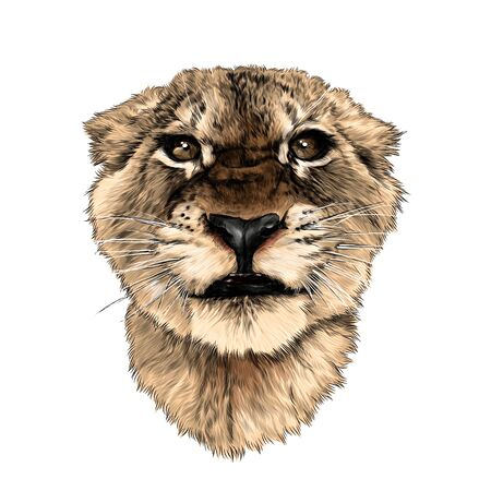 muzzle of a small tiger with a full-face grin, sketch vector graphics color drawing on a white background Illustration