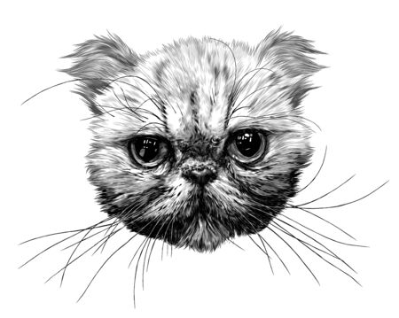 muzzle of an Exot cat with a long mustache, sketch vector graphics monochrome illustration on a white background