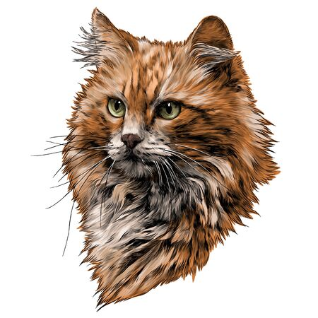 red cat muzzle with thick hair, sketch vector graphics color illustration on a white background