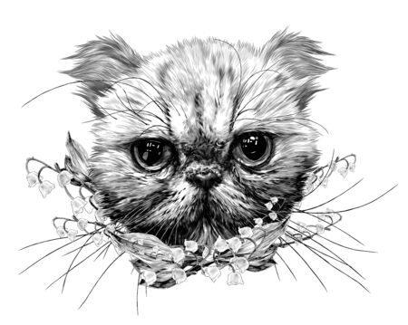 muzzle of an Exot cat with a long mustache surrounded by bell flowers, sketch vector graphics monochrome illustration on a white background Ilustración de vector
