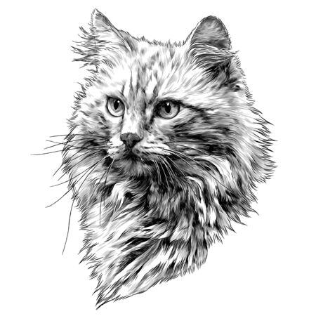 Museau de chat rouge avec des cheveux épais, croquis d'illustration monochrome de graphiques vectoriels sur fond blanc Vecteurs