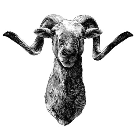 goat with big horns full face muzzle, sketch vector graphics monochrome illustration on white background