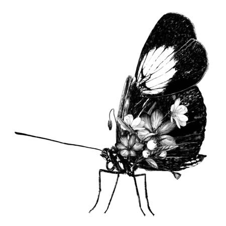 tropical butterfly sitting side view decorated with flowers and leaves, sketch vector graphics monochrome illustration on white background Illustration