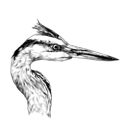 Heron head looks away profile, sketch vector graphics monochrome illustration on white background Illustration