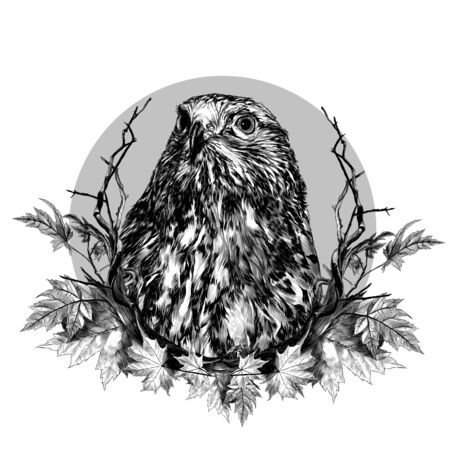 hawk head composition in a circle decorated with autumn maple leaves and dry branches, sketch vector graphics monochrome illustration on a white background