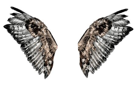 wings with thick feathers, sketch vector graphics color illustration on a white background Vecteurs