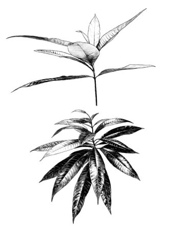 tropical bushes with wide leaves, sketch vector graphics monochrome illustration on a white background