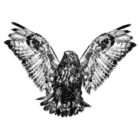 hawk in flight with spread wings and clawed paws in front, sketch vector graphics monochrome illustration on a white background