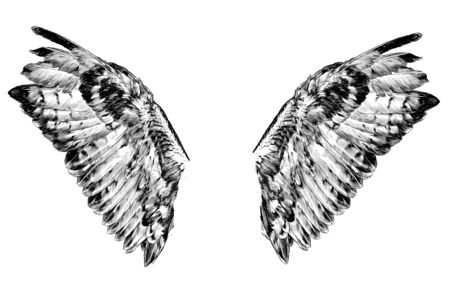 wings with thick feathers, sketch vector graphics monochrome illustration on a white background