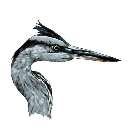 Heron head looks away profile, sketch vector graphic color illustration on white background 向量圖像