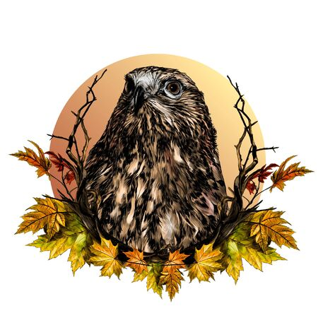 hawk head composition in a circle decorated with autumn maple leaves and dry branches, sketch vector graphics color illustration on a white background 向量圖像
