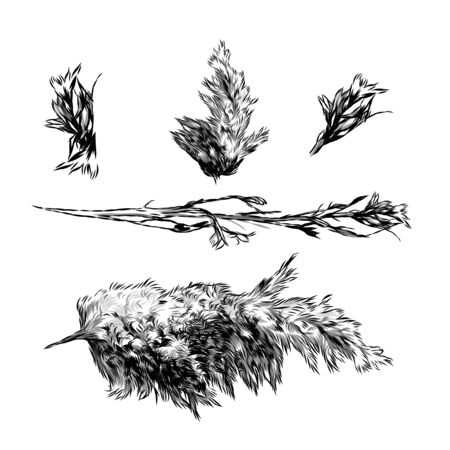set of dry grass and fluffy plants, sketch vector graphics monochrome illustration on a white background