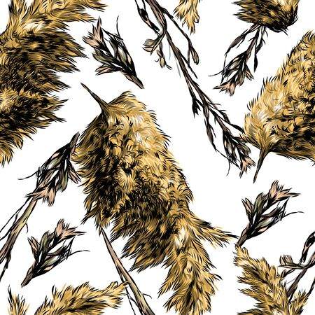 seamless pattern with images of dry grass and fluffy autumn plants, sketch vector graphics color illustration on a white background