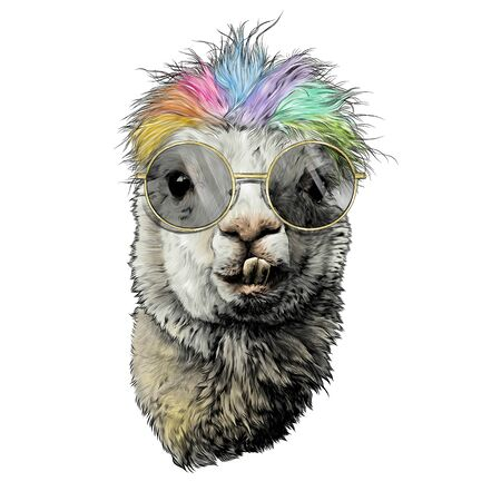 llama or Alpaca head funny with protruding teeth fashionable with round glasses and rainbow colored hair, sketch vector graphics color illustration on a white background
