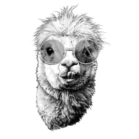 llama or Alpaca head funny with protruding teeth fashionable in round glasses, sketch vector graphics monochrome illustration on a white background Illustration